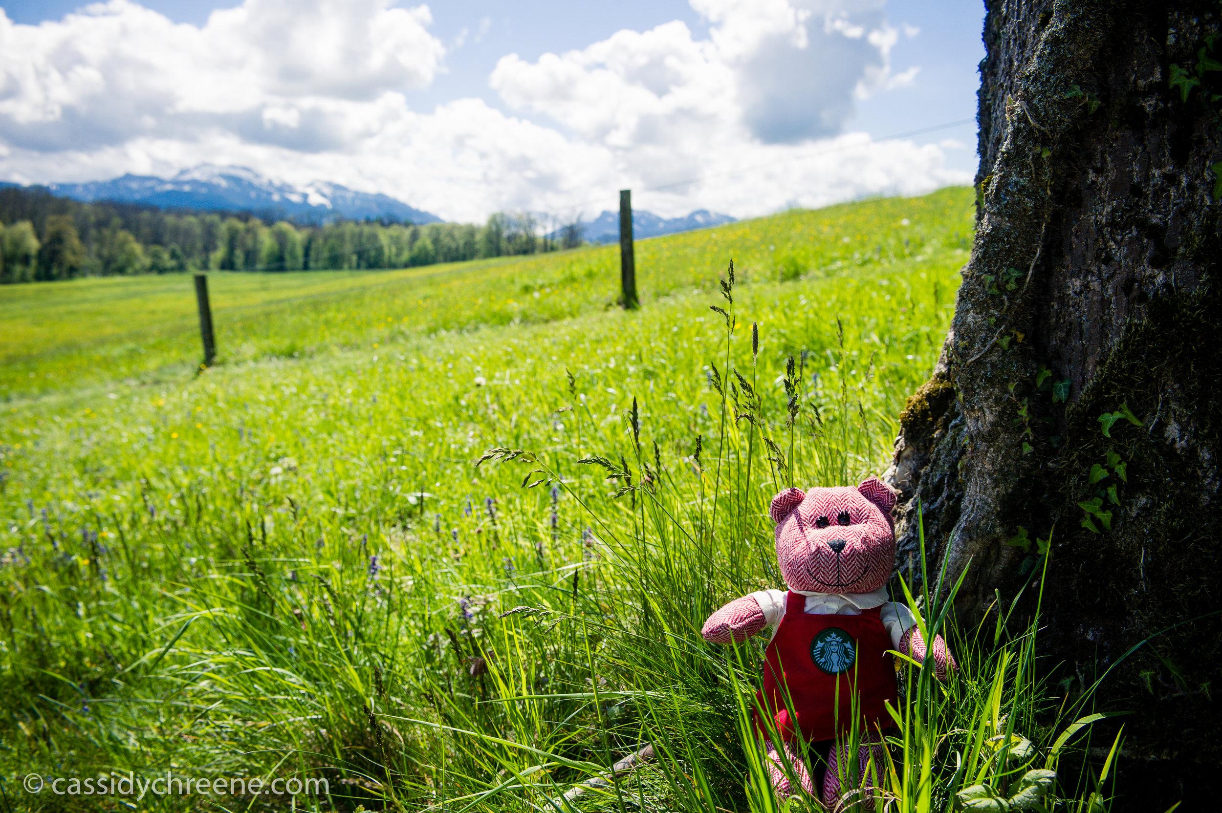 traveling barista bear salzburg-9.jpg
