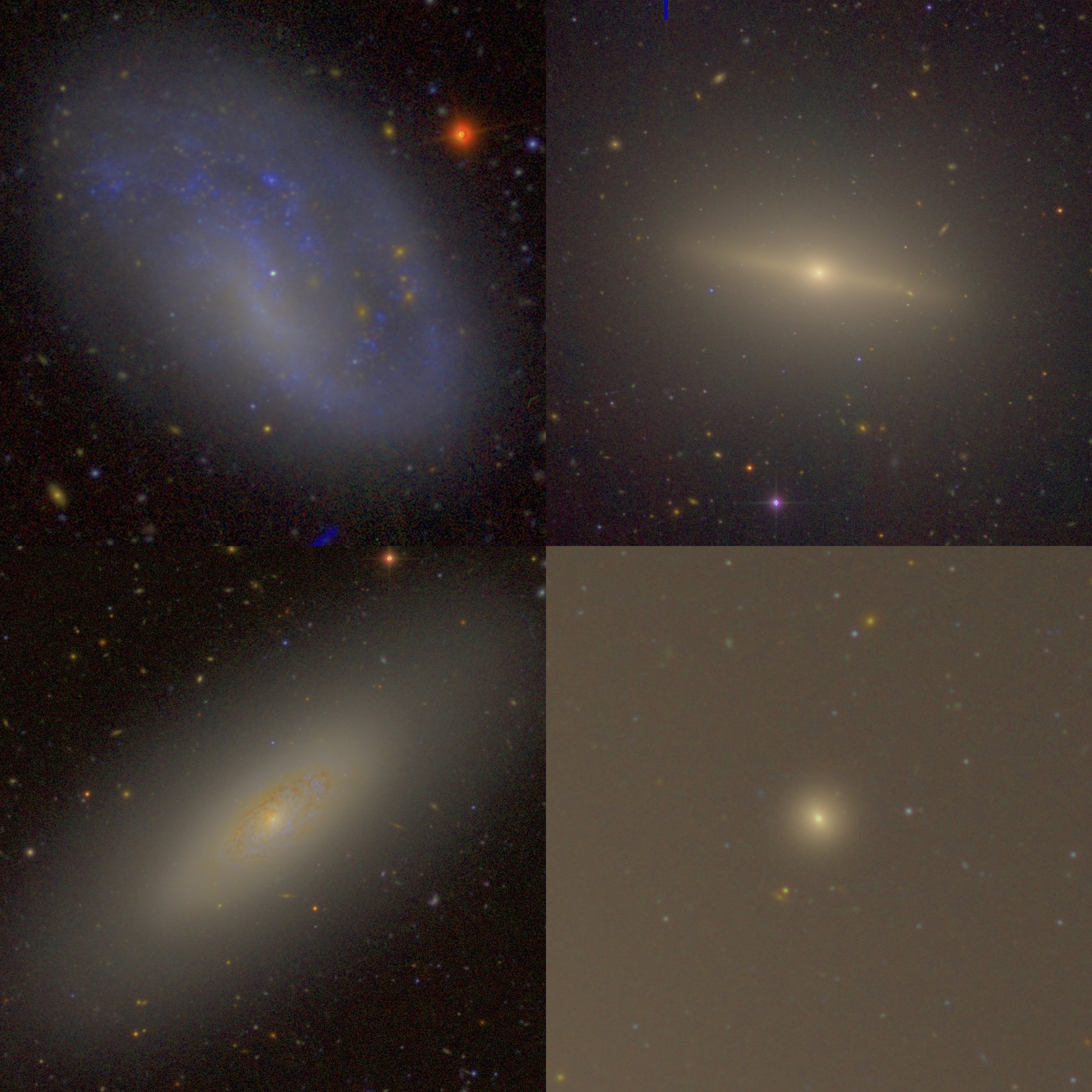 These are four diverse examples of galaxies in the Virgo Cluster that host nuclear star clusters at their centers (which is what I study but are too small and faint to be seen in these images). These color images are created by combining real images from the Canada-France-Hawaii Telescope taken with different filters. Part of my research involves understanding how such different galaxies can all form a nuclear star cluster, and what must happen in these galaxies for that to occur.