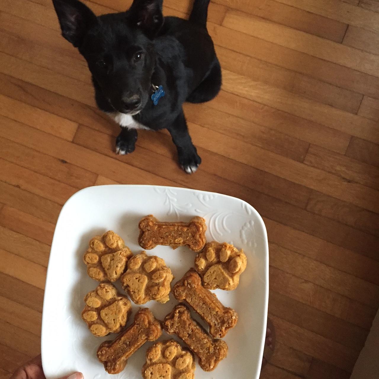 Follow my pup on Instagram: @Zodiacthemutt