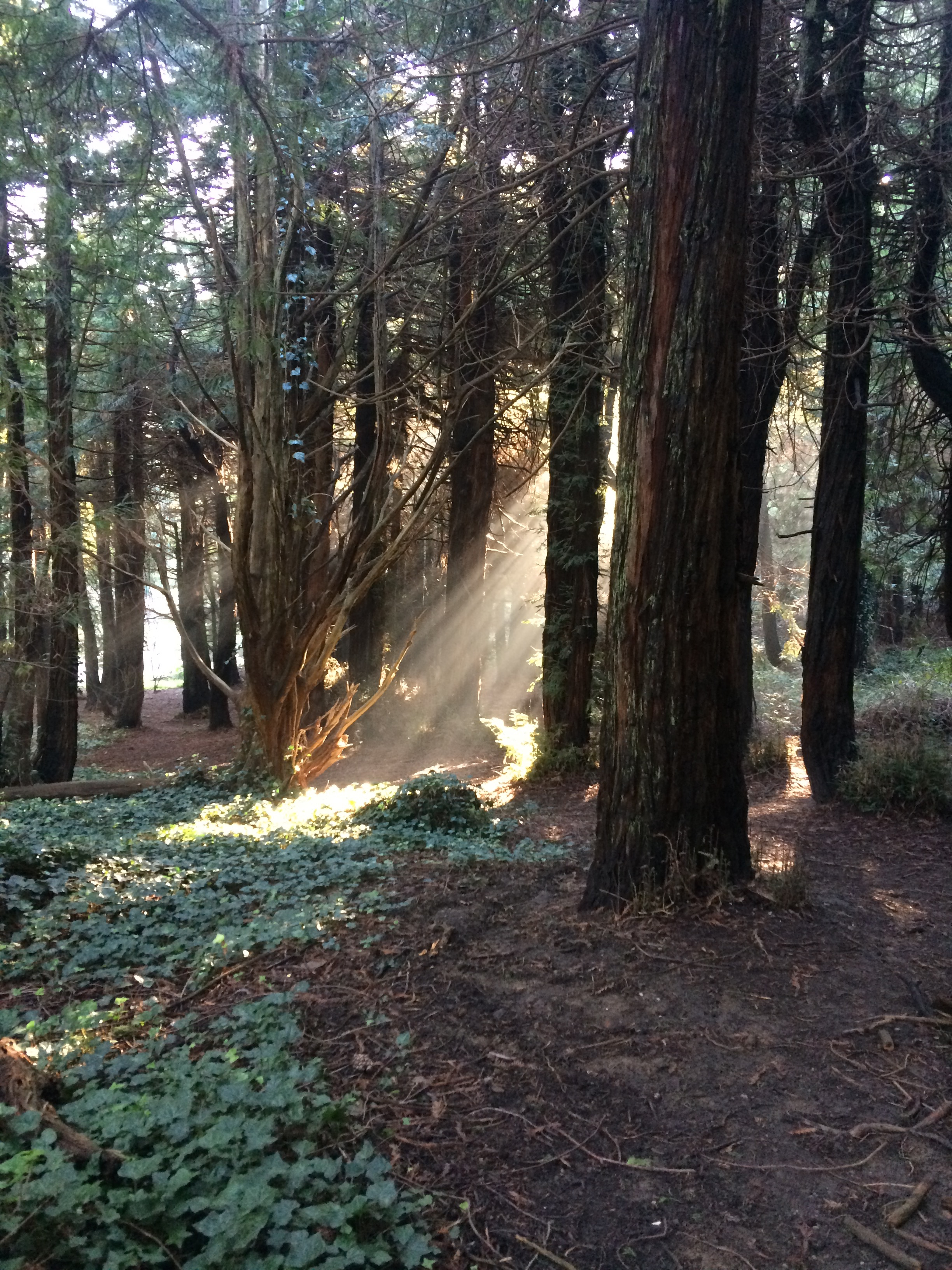 """""""Breakthrough"""" John McLaren Park, San Francisco, California Taken by my daughter on January 14, 2017 at 8:30am Thank you, Alicia, for sharing this beautiful photo from your walk this morning in this magical place. It is the perfect analogy for the awareness insights that so inspire me with my amazing clients."""