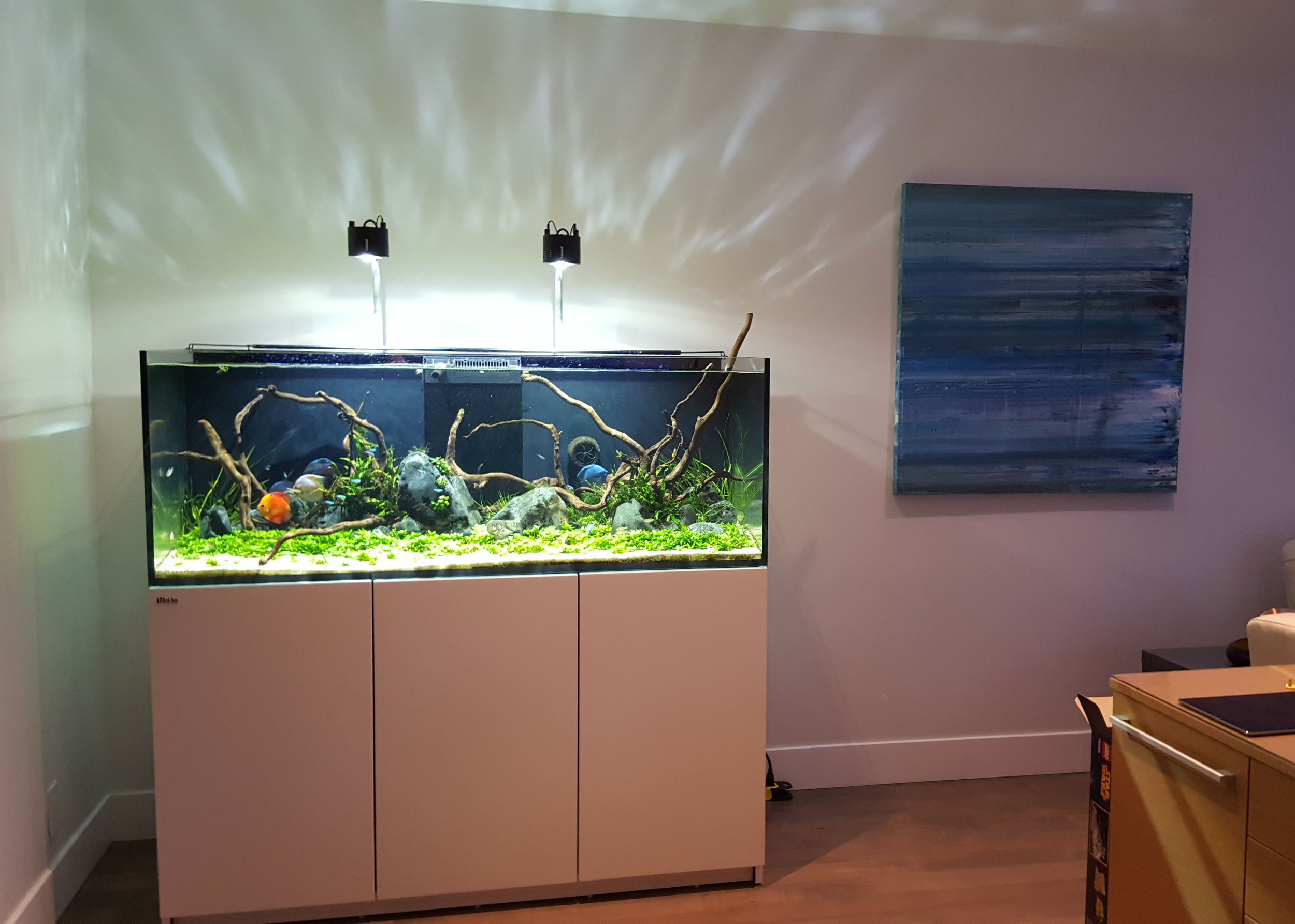 Aquascaping - I design luxury freshwater aquarium systems. Everything you see is alive, dynamic, and every small detail has its purpose.
