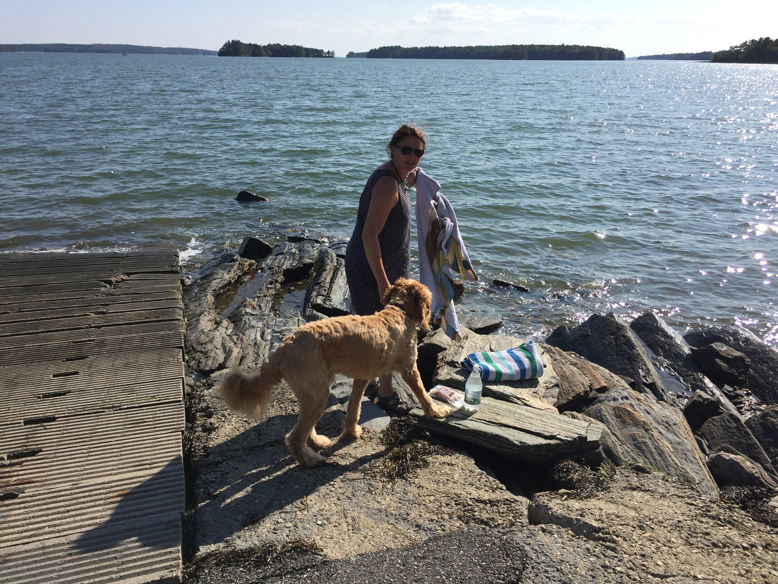 Maine dock dog MP.jpg