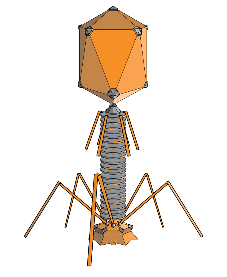 Figure 1                Source \(^{[1]}\)
