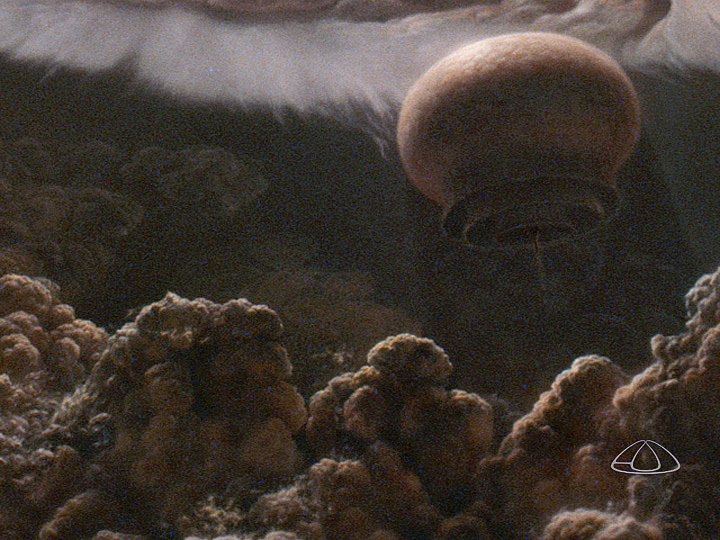 "A ""Floater"" from Cosmos, Episode 2   ""Part of the larger mural, ""Hunters, Floaters, and Sinkers"" painted for the series.""\(^{[4]}\)  Image by Adolf Schaller."