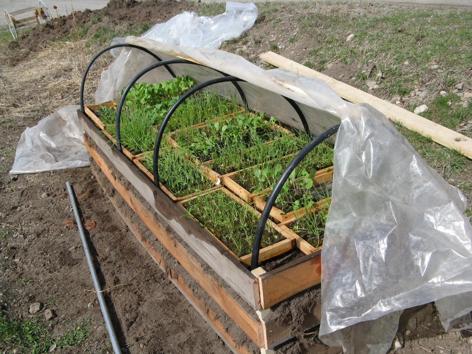 cold frame 002 - Copy.JPG