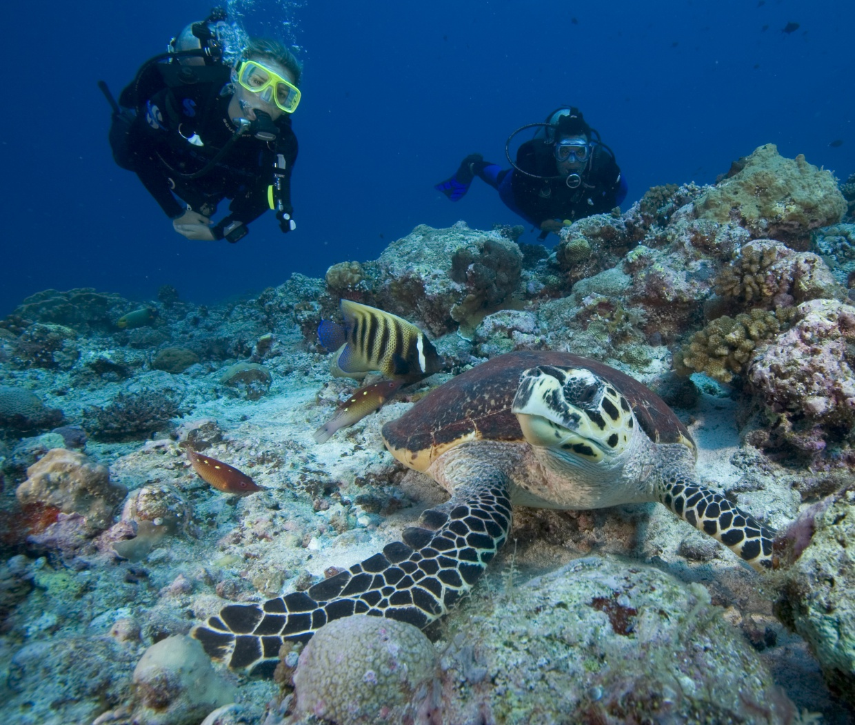 Divers_and_turtle_[7063-LARGE].jpg