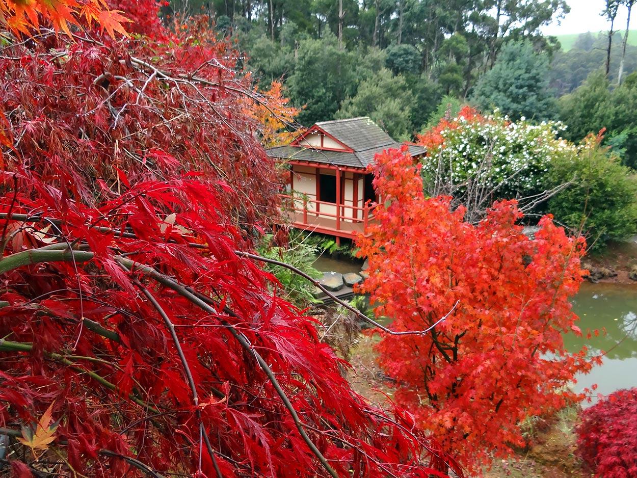 autumn---dsc03083_10322457344_o.jpg