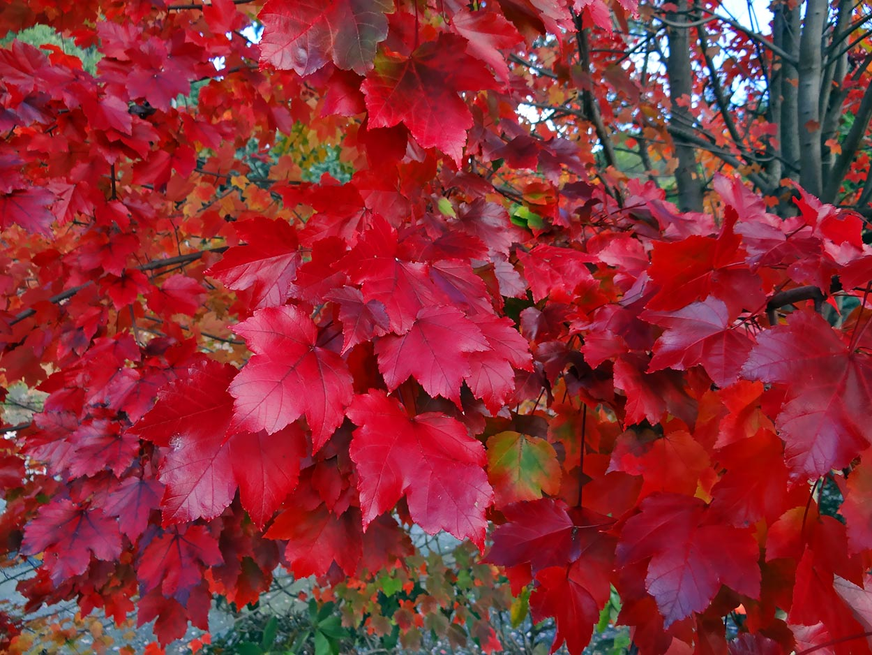 autumn---dsc03180_10322420356_o.jpg