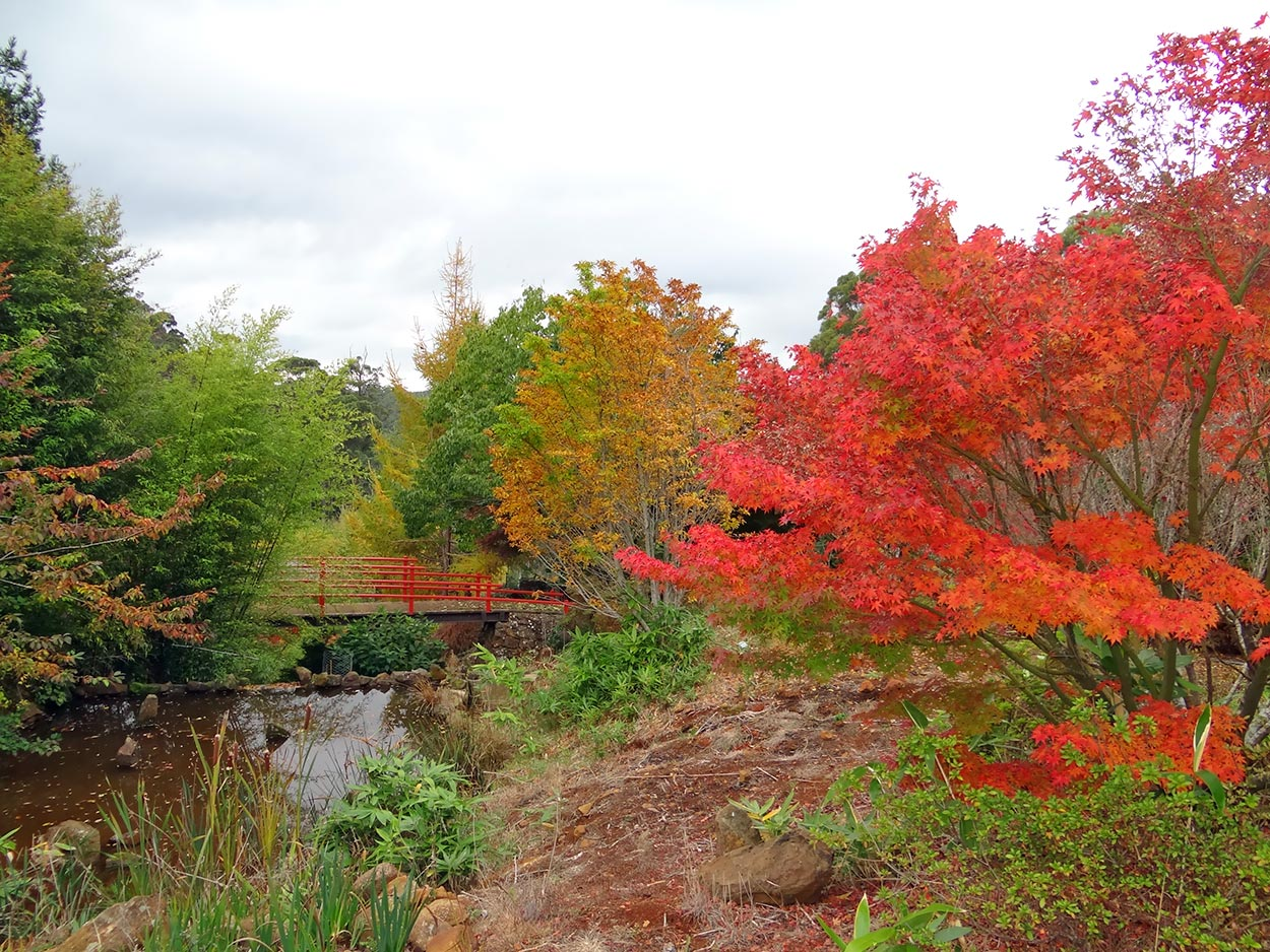 autumn---dsc06818_10322648896_o.jpg