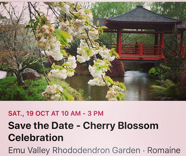 19 October 10am - 3pm #cherryblossomcelebration #cherryblossom #taikodrums #bonsai #ikebana #gardenparty #emuvalleyrhododendrongarden #evrg #volunteerorganisation #spiritoftasmania #tassiestyle