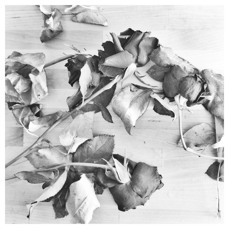 Alexsia-Heller-roses