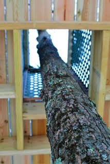 The deck was built around several trees. The view looking up through the deck.