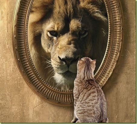Cat to Lion.jpg