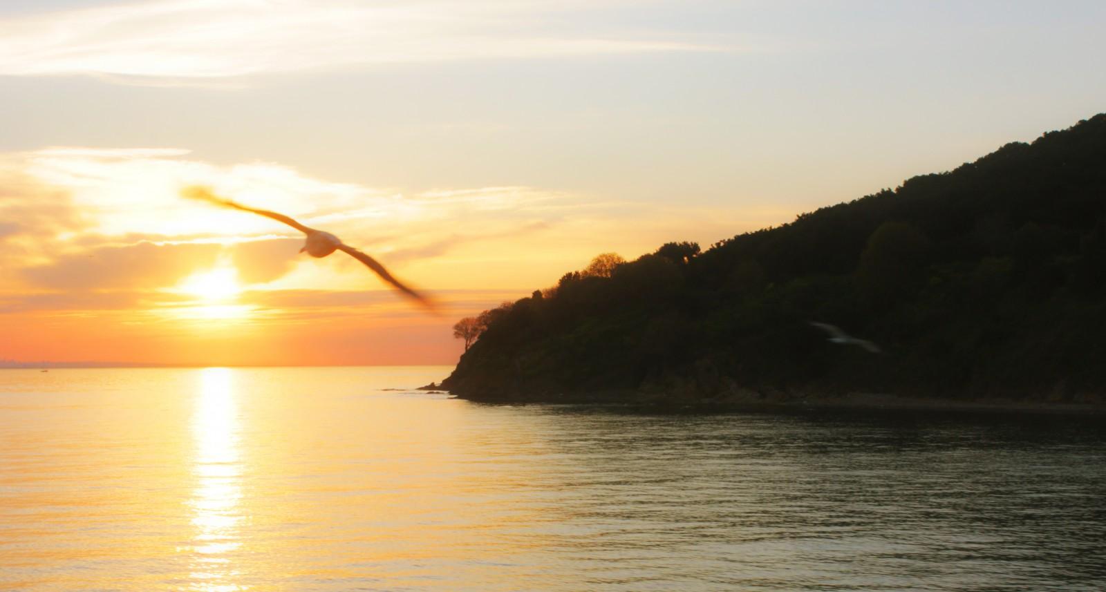 blue_light_sunset_sea_orange_sun_color_bird-1042921.jpg!d.jpg