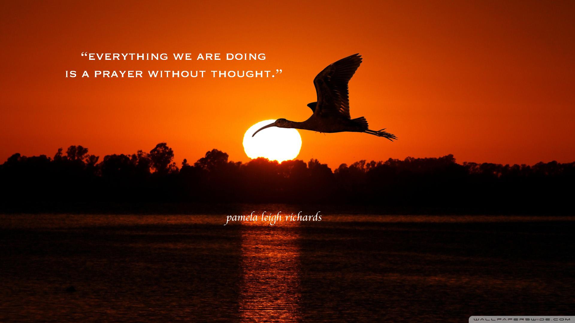 Bird-flying-sunset-pamela-quote.jpg