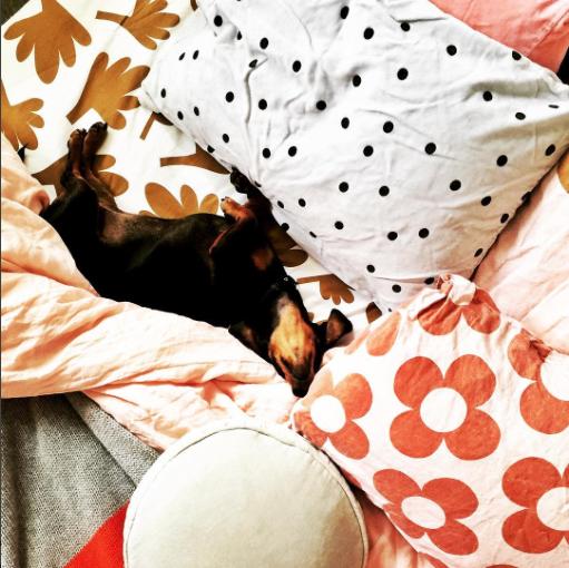 We j'dore you Sydney Sausage. Your choice of bedlinen is pretty great too. Image: Rachel Castle Instagram