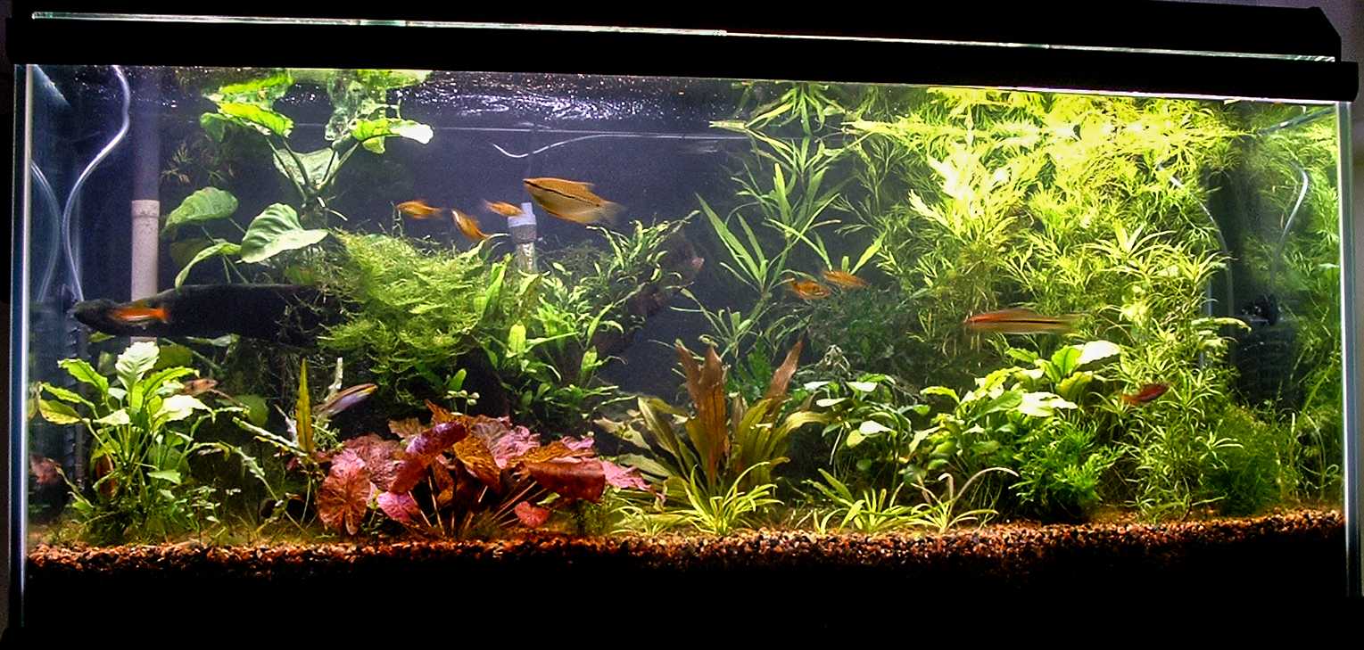 Old 75G test tank without supplemental CO2.