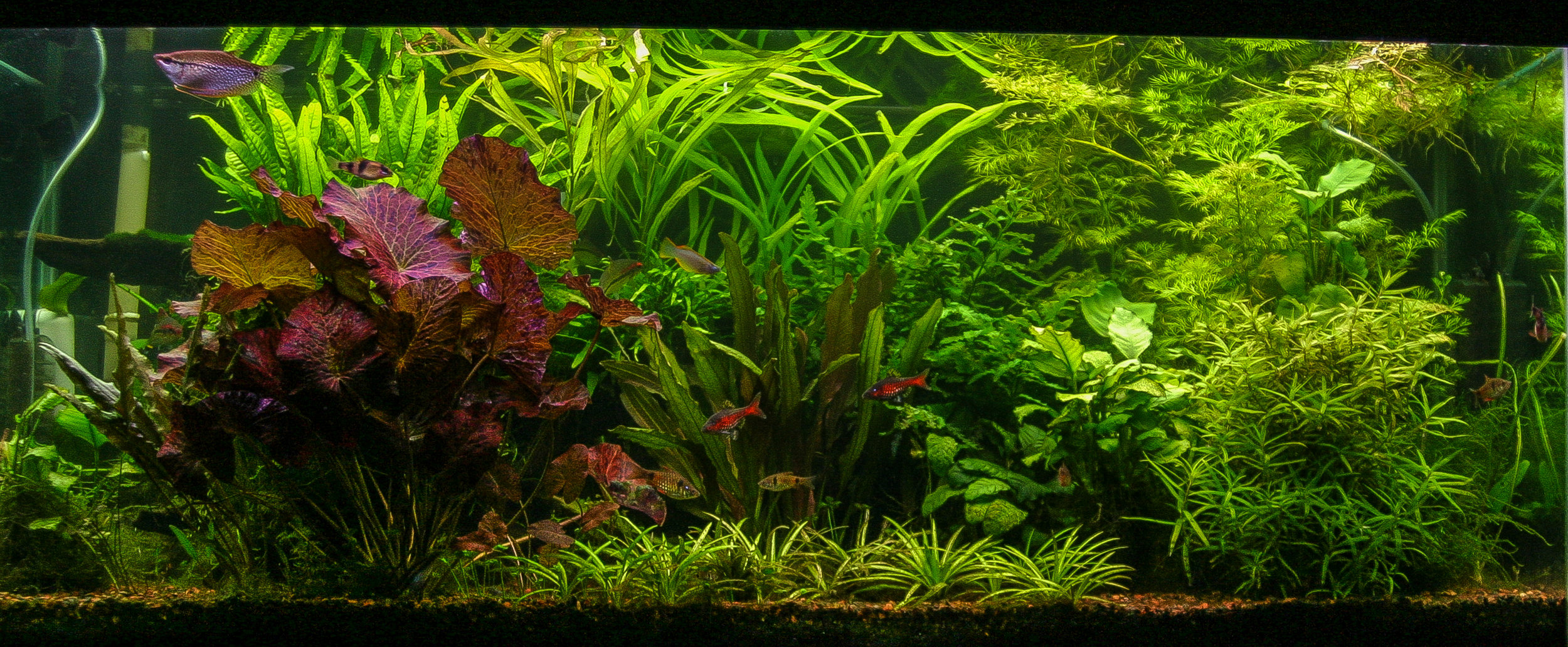 Tank after a few weeks of very moderate levels of CO2