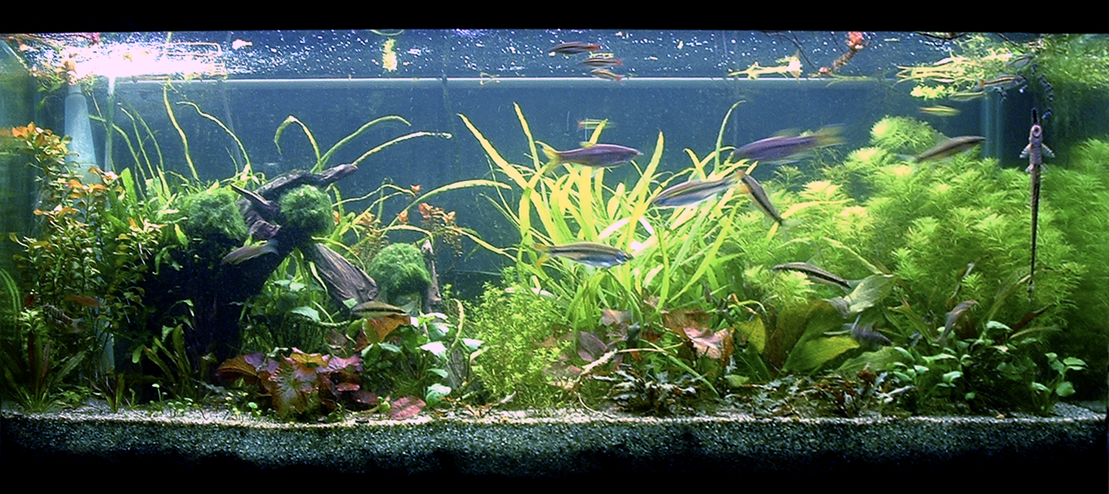Another 75G tank without adequate fertilization (but with supplemental CO2)