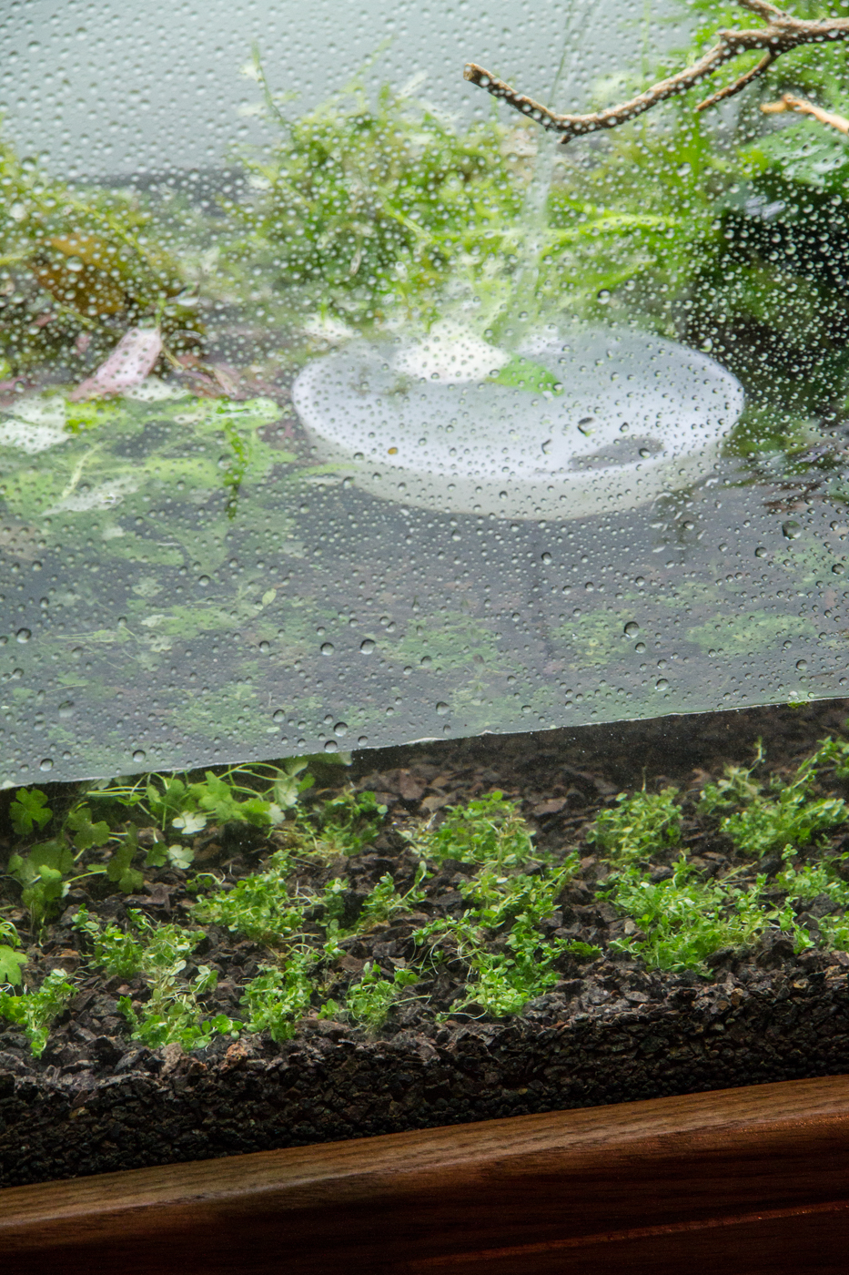 Once the water is deep enough to cover your foreground planting and the dish is completely submerged, you are increase the flow  slightly .