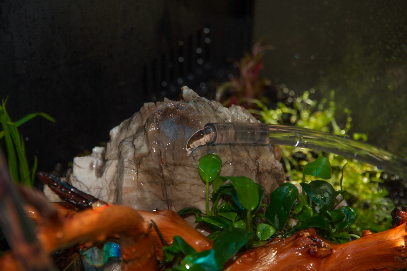 I made sure that the water flowed gently over the rock before hitting the substrate.