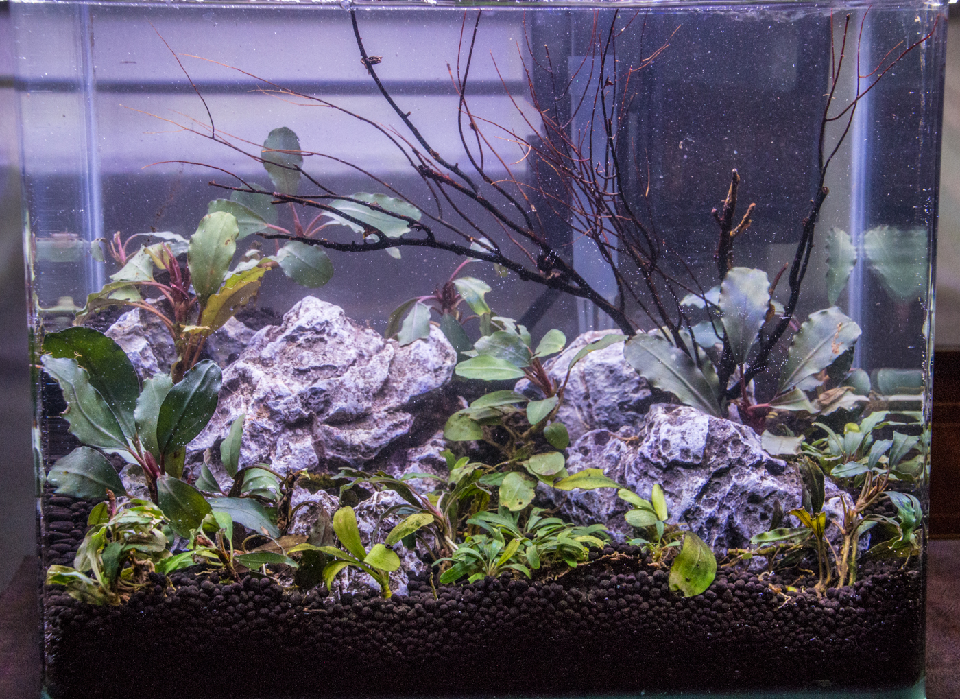And there you are with another nice, clean tank!
