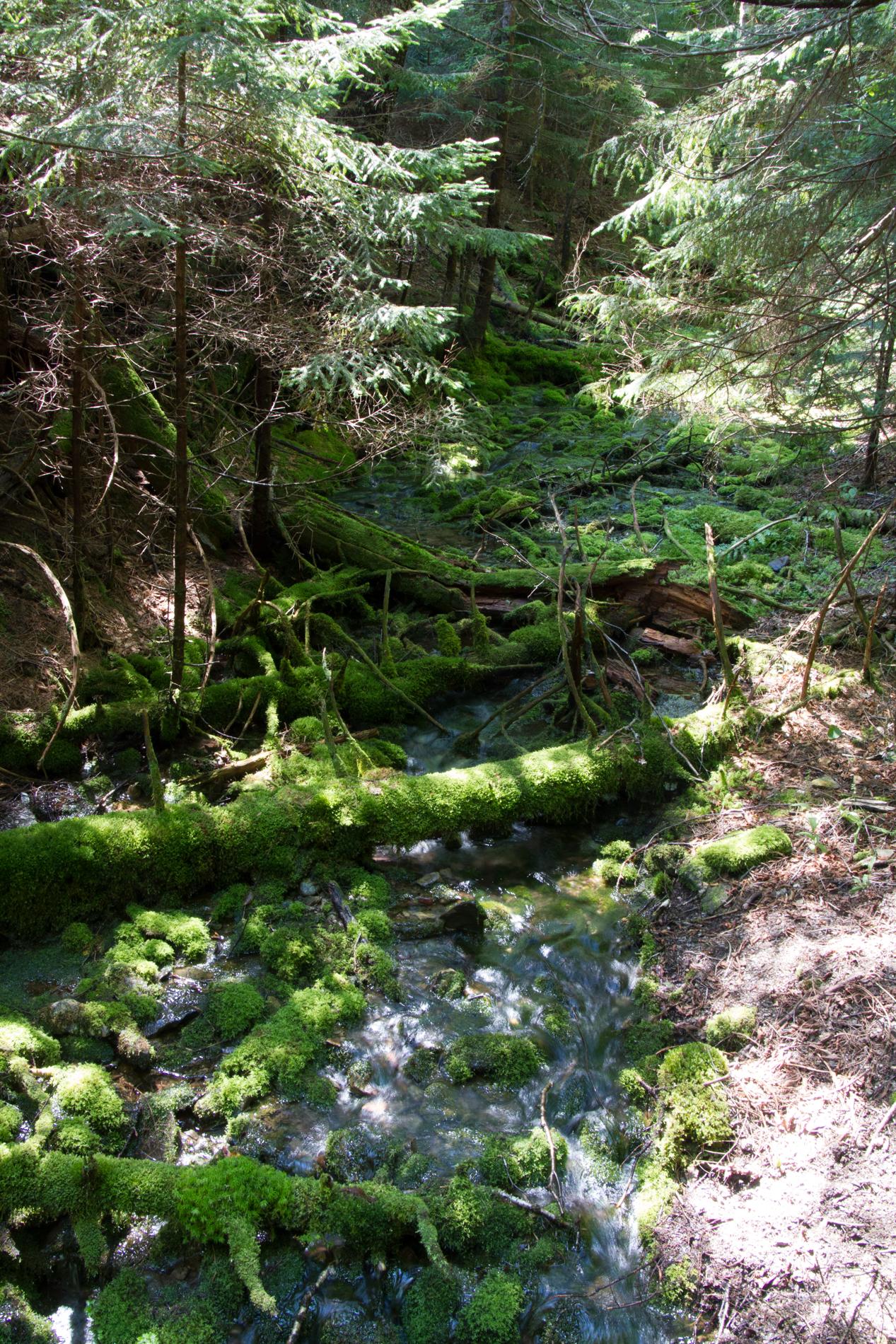 2011 13  Canada Trip_0113.jpg
