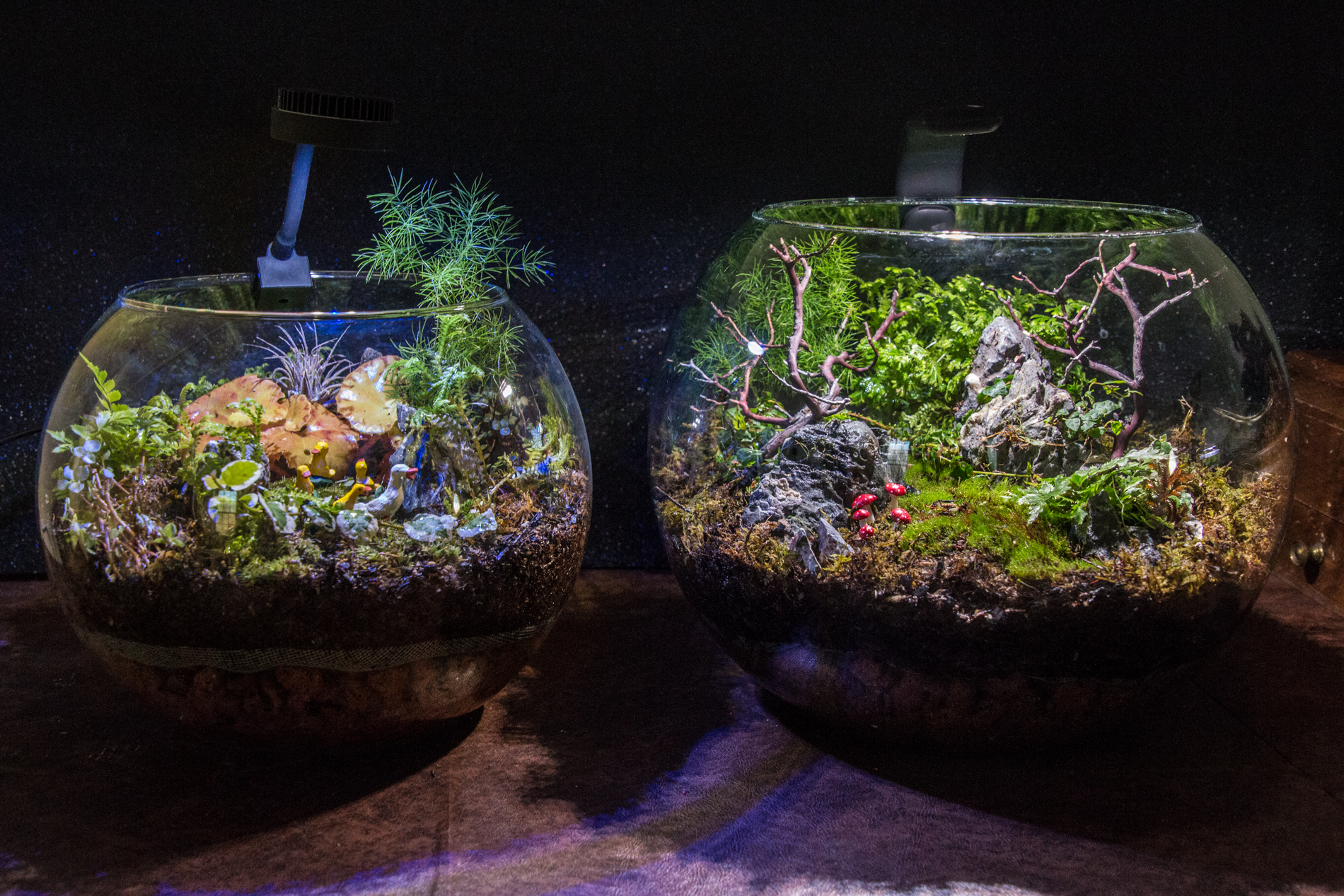 ZetLight (left) and AquaLighter (right) on two globe shaped terrariums. These can bring a spot of sunshine to any corner of any room in the house!