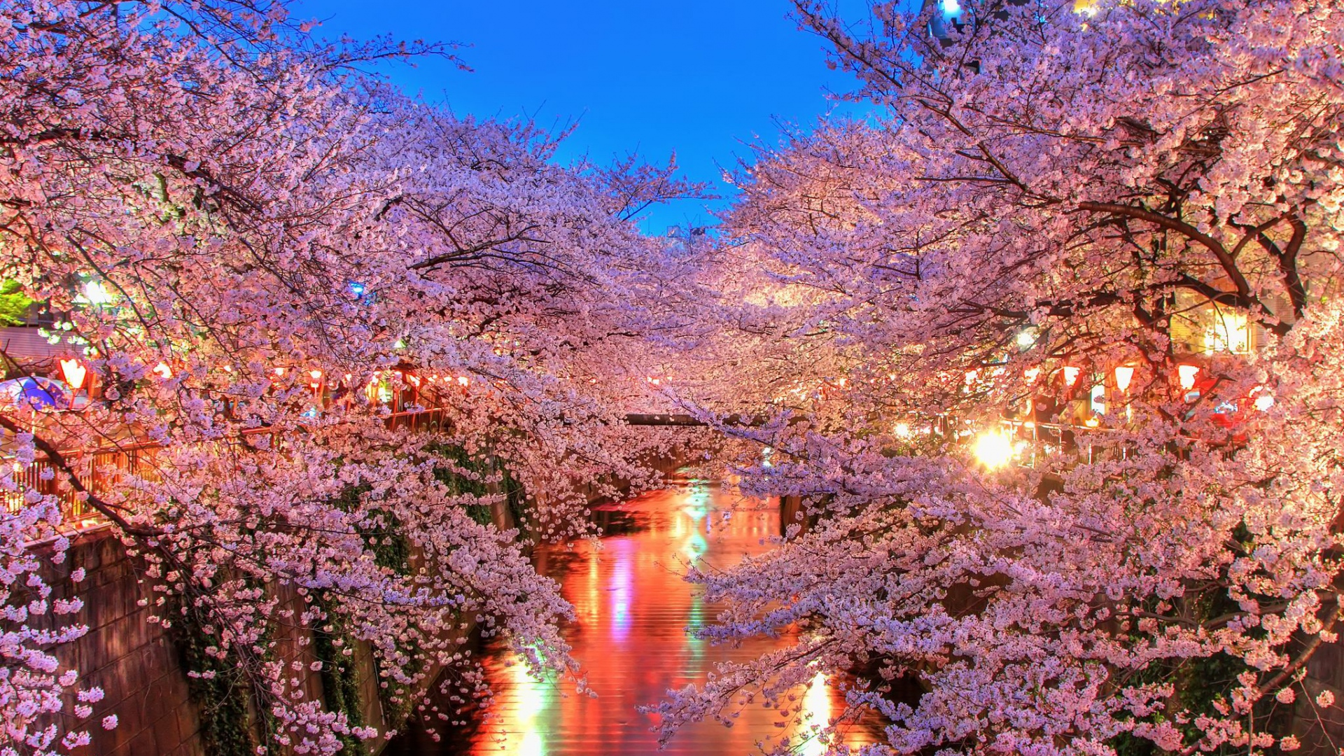 Sakura trees are a sight to behold.