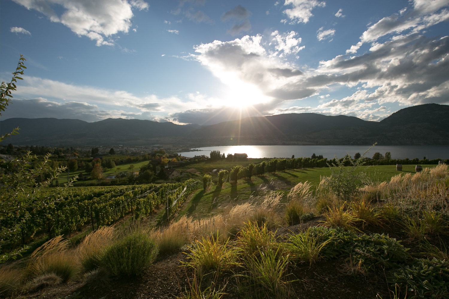 View from the Vanilla Pod Restaurant at Poplar Grove Winery. South Okanagan, BC