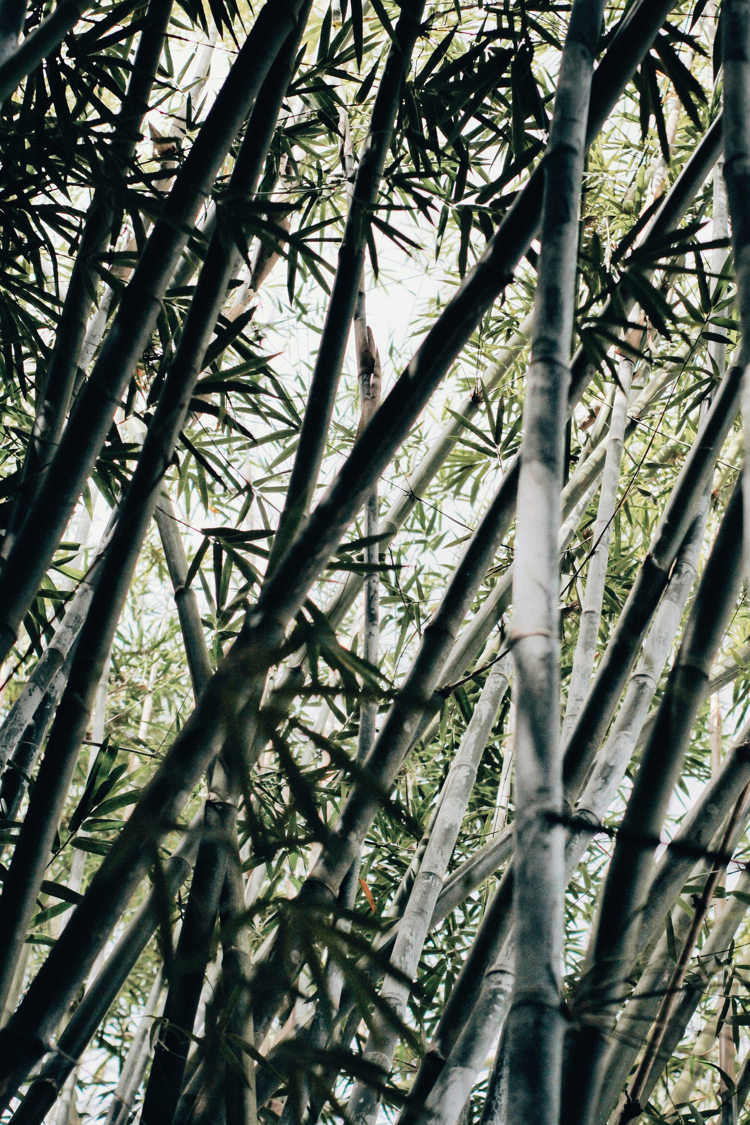 bamboo-grass-plant-2534507.jpg