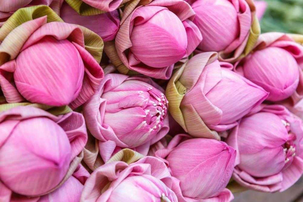 pink rose buds.jpg