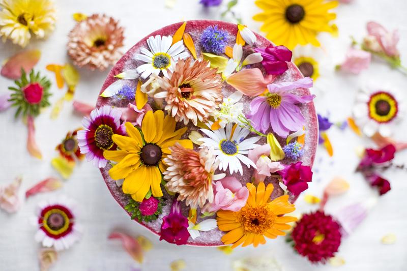 Flower_power.jpg
