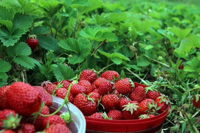 Zero calorie candy? Strawberries are up for the challenge!