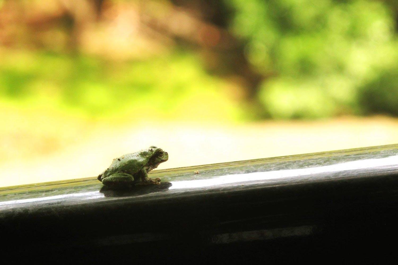 retreat-frog3.jpg
