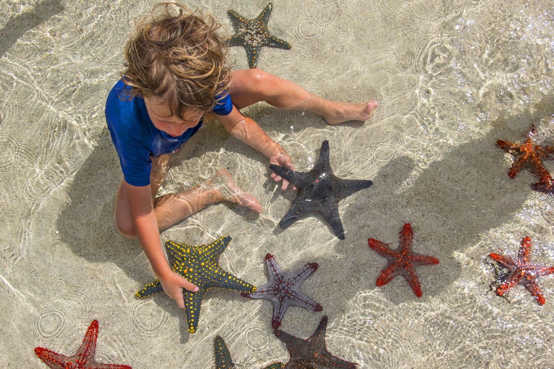 The Starfish Gardens