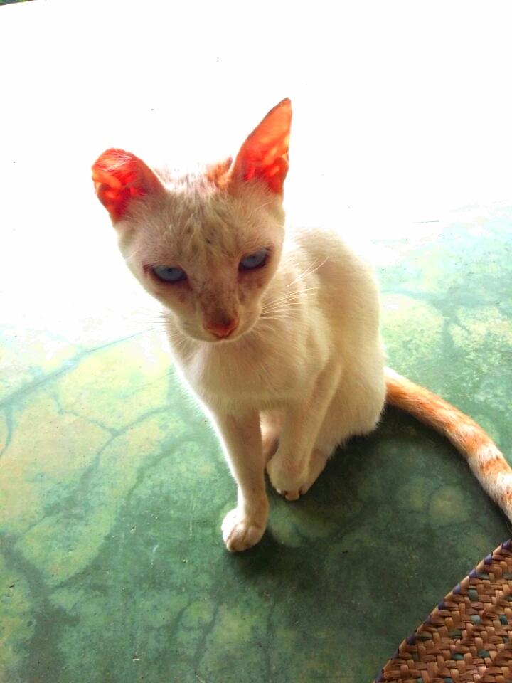 Gringo the Cat