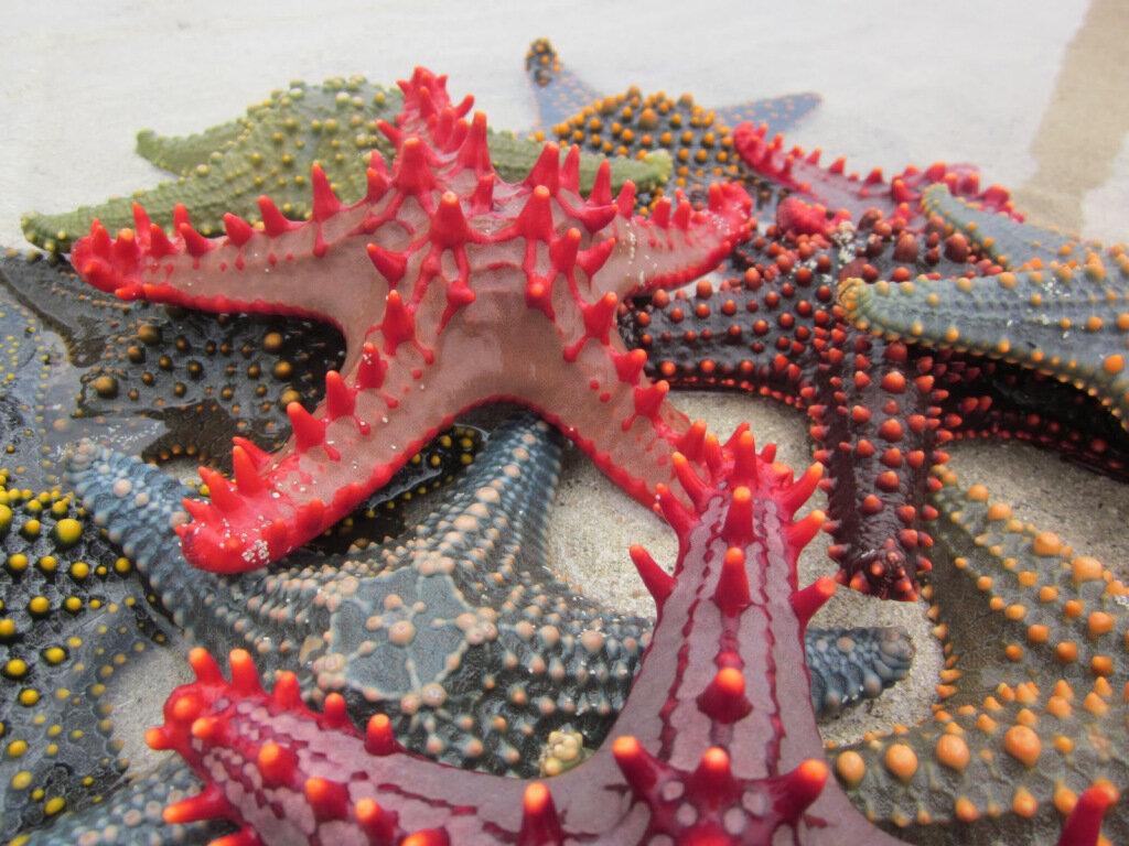 Sand Island's Starfish Village, courtesy of Arun