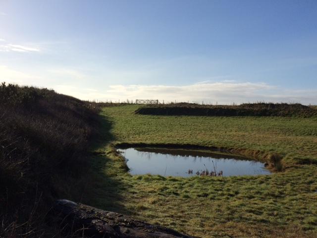 Slade Garden Pond.JPG