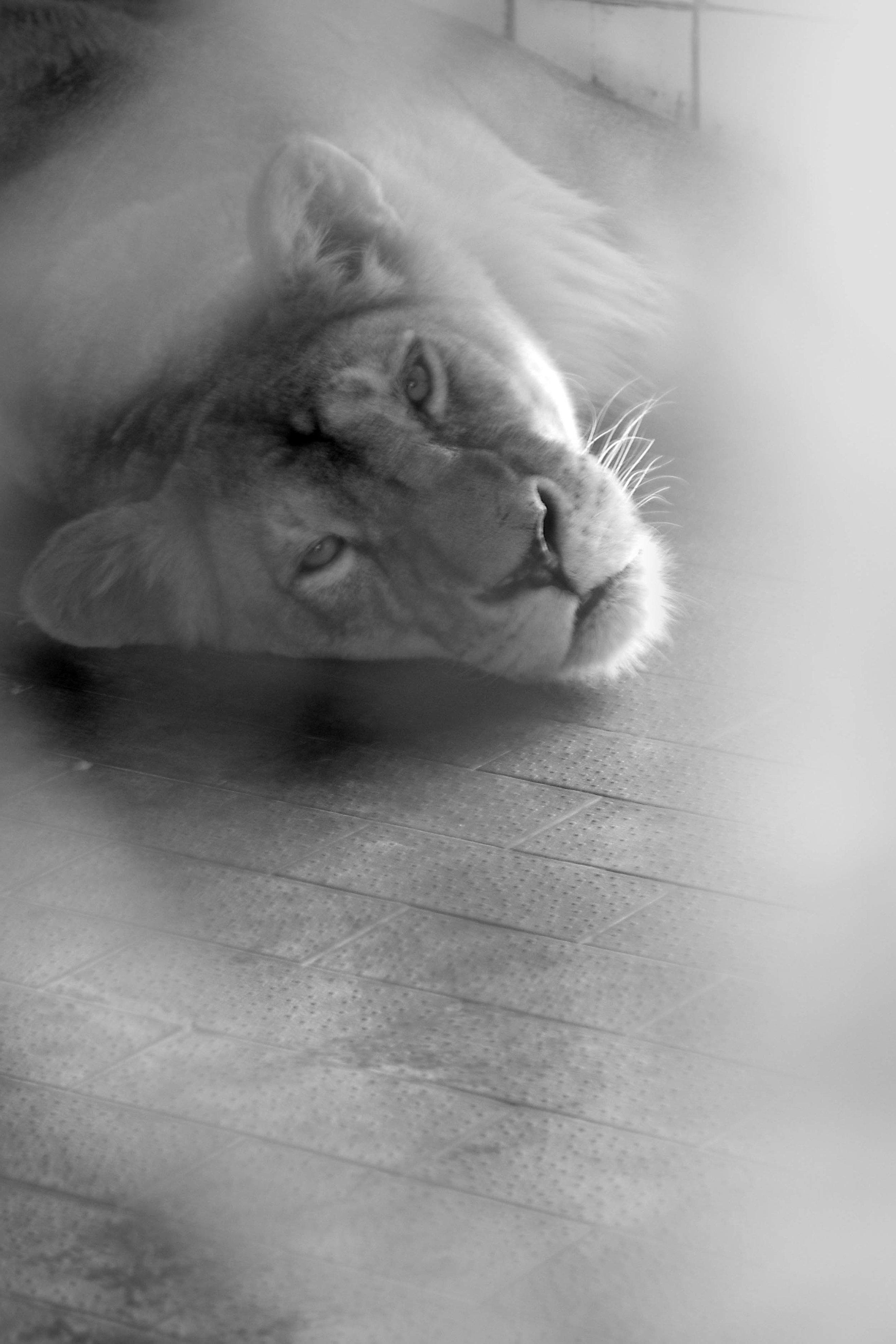 sad animals #2