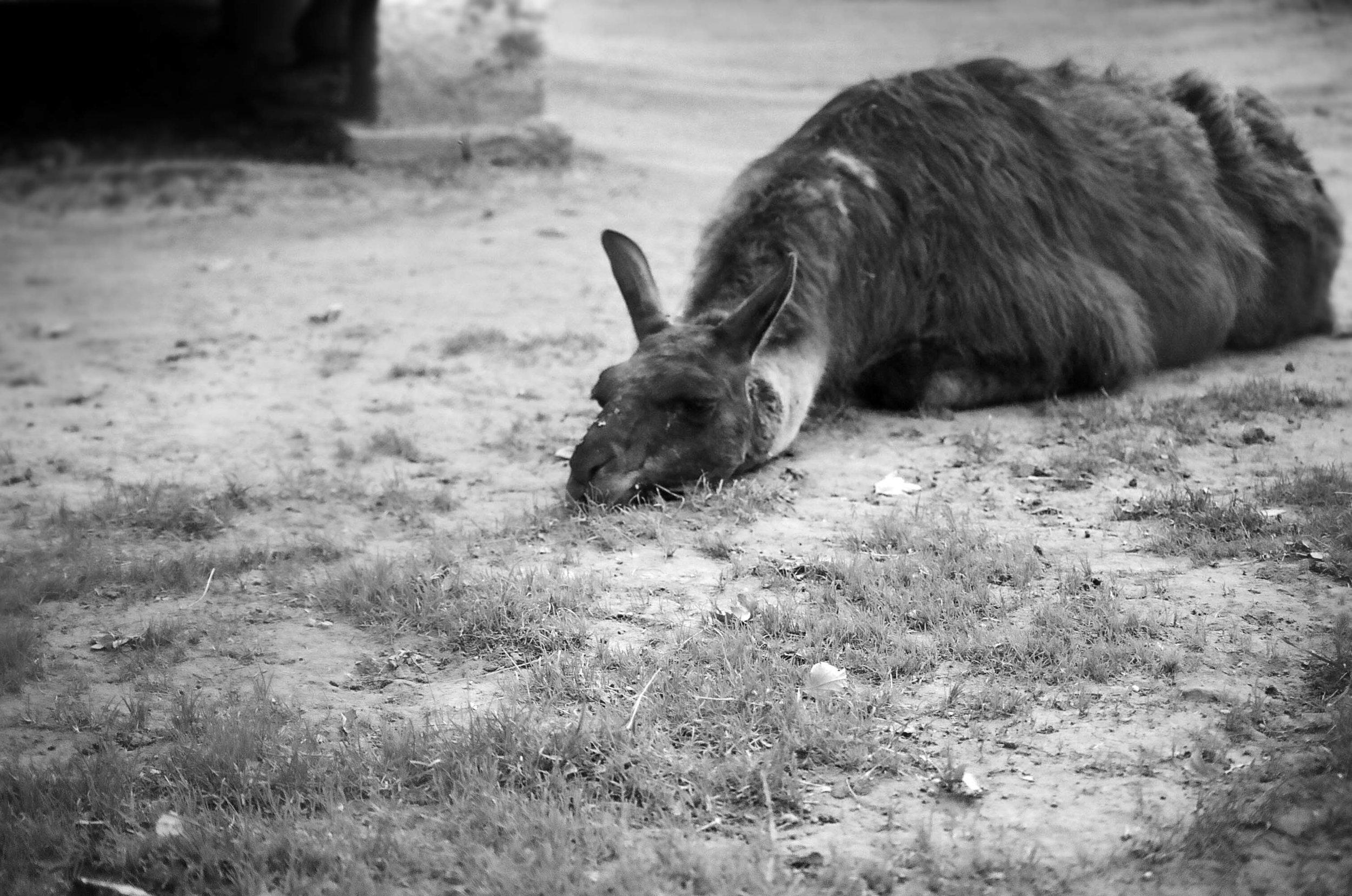 sad animals #3