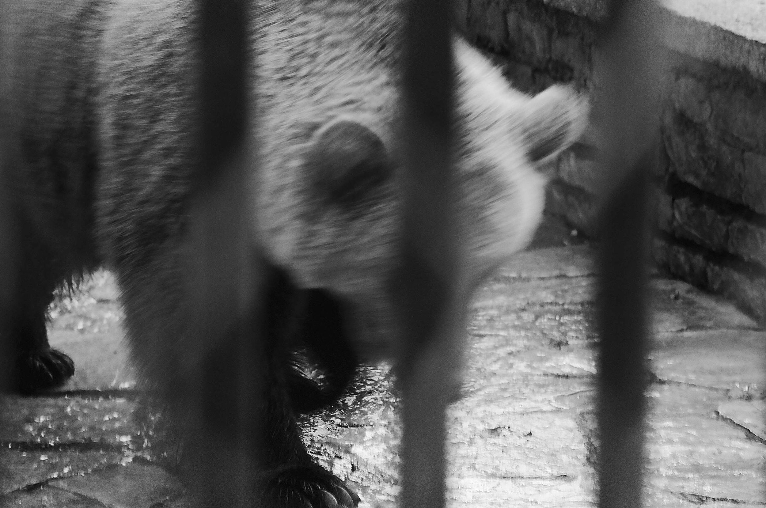 sad animals #4