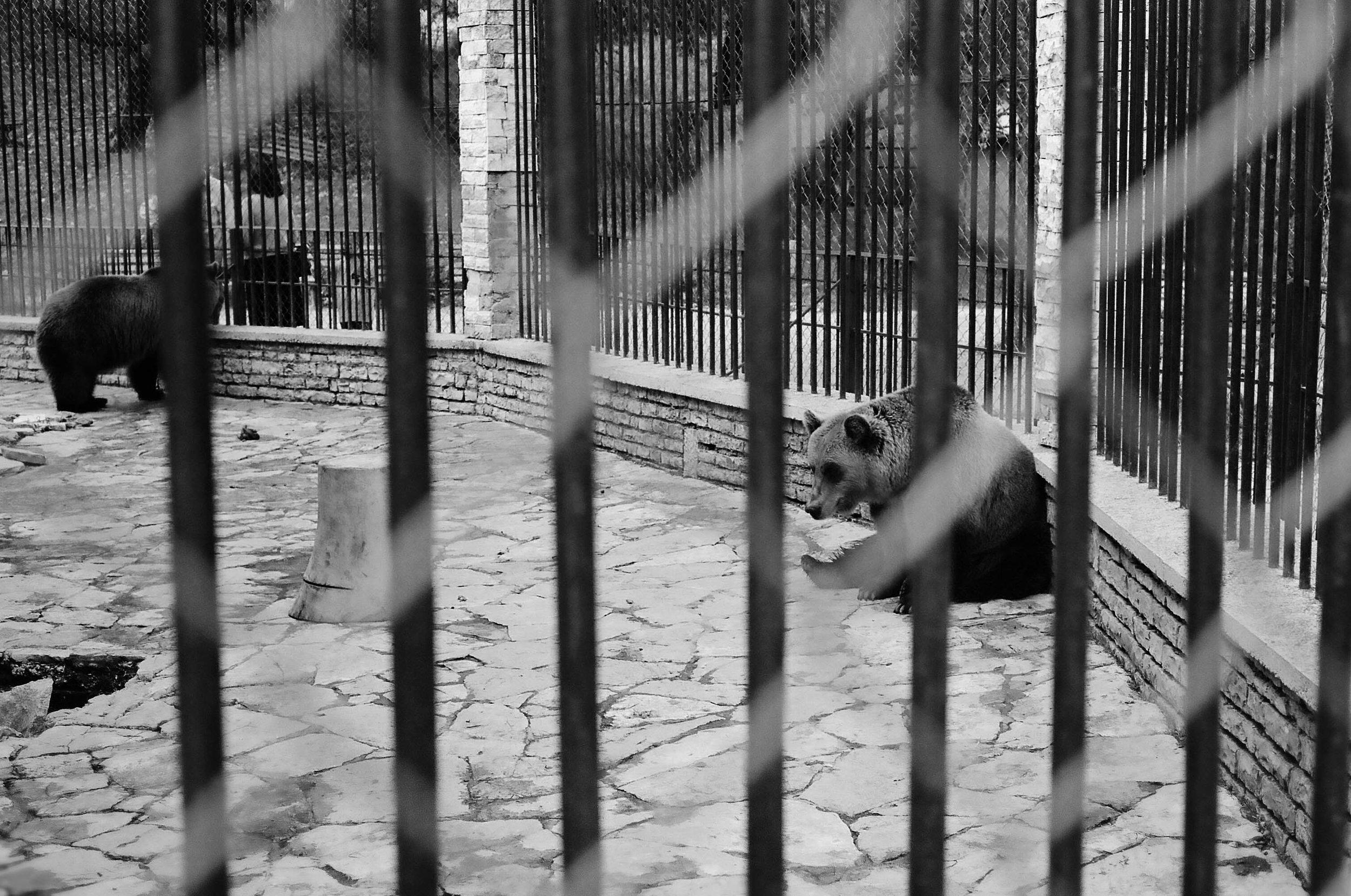 sad animals #6