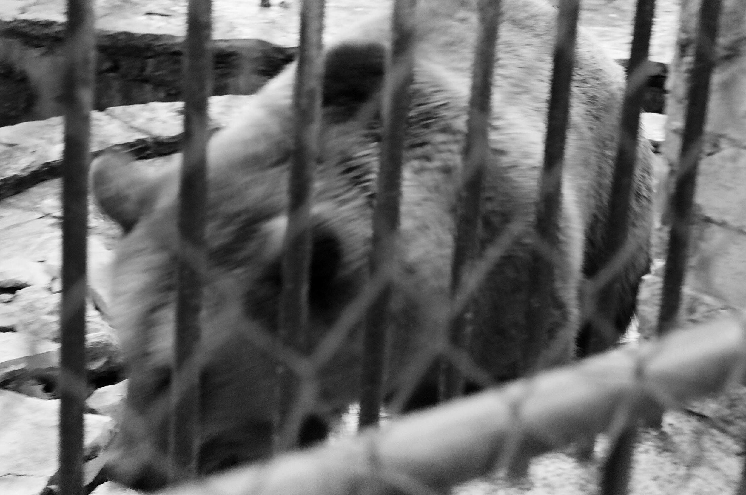 sad animals #5