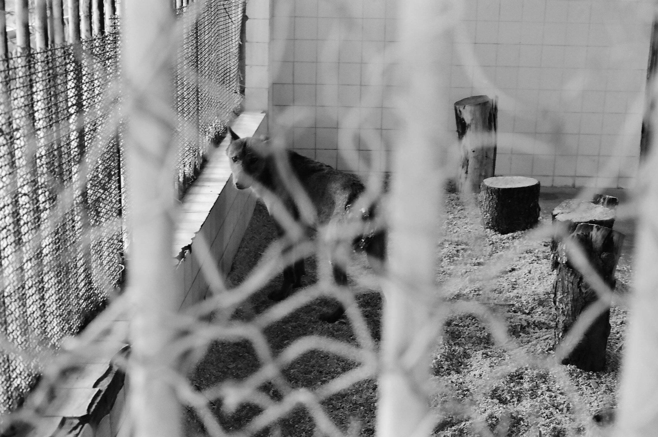 sad animals #11.jpg