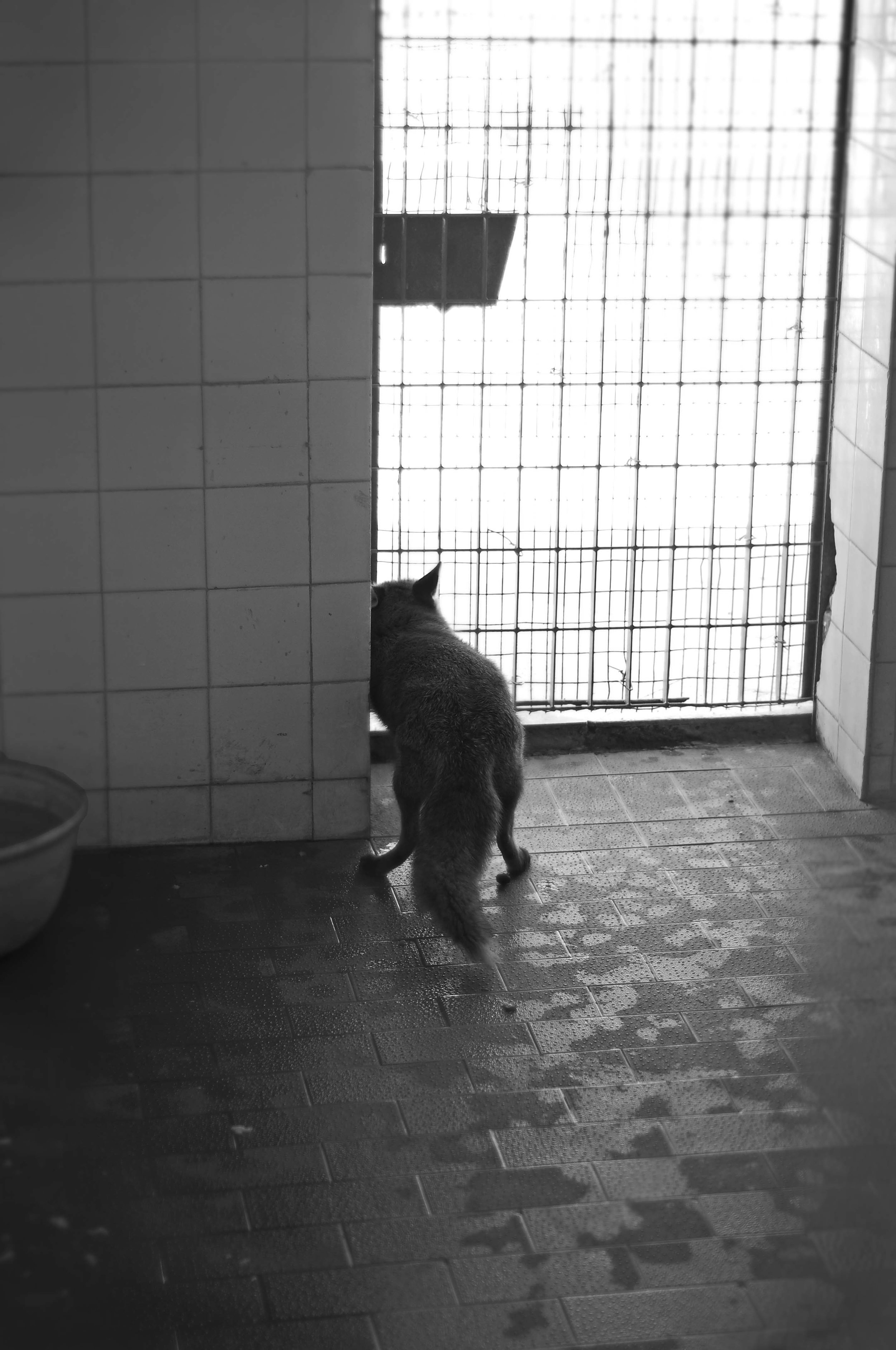 sad animals #10