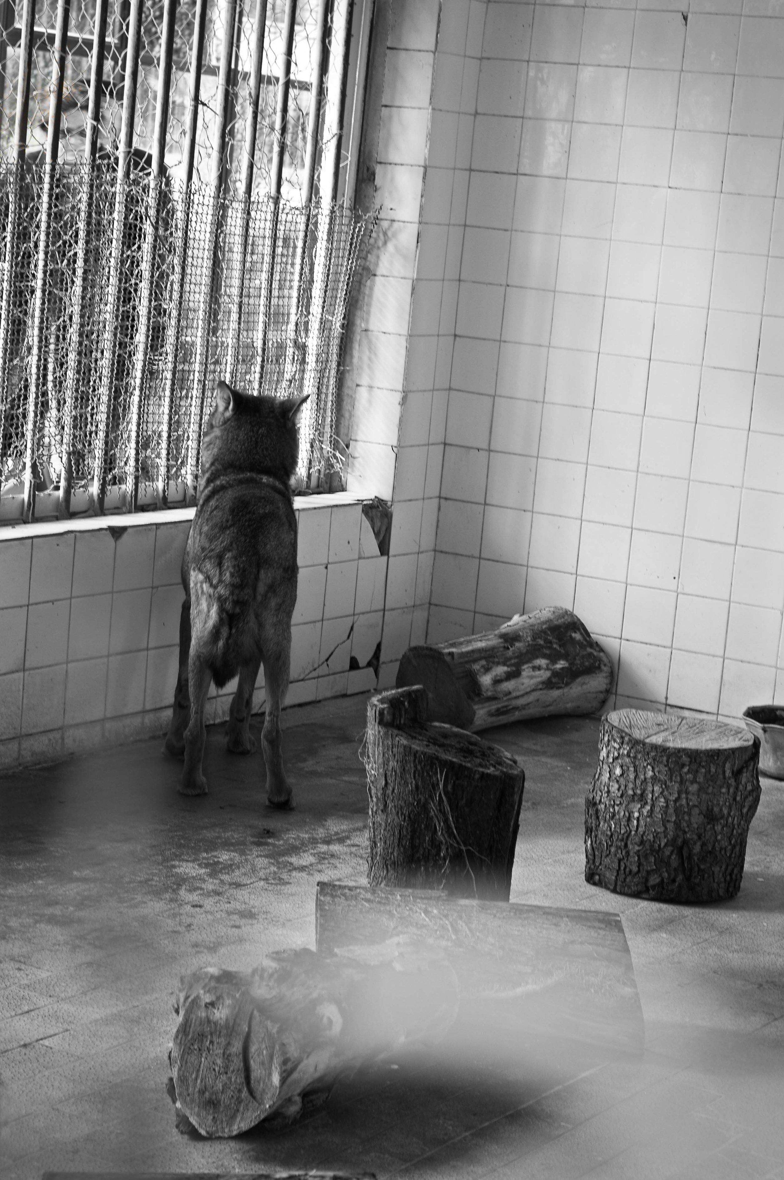 sad animals #12