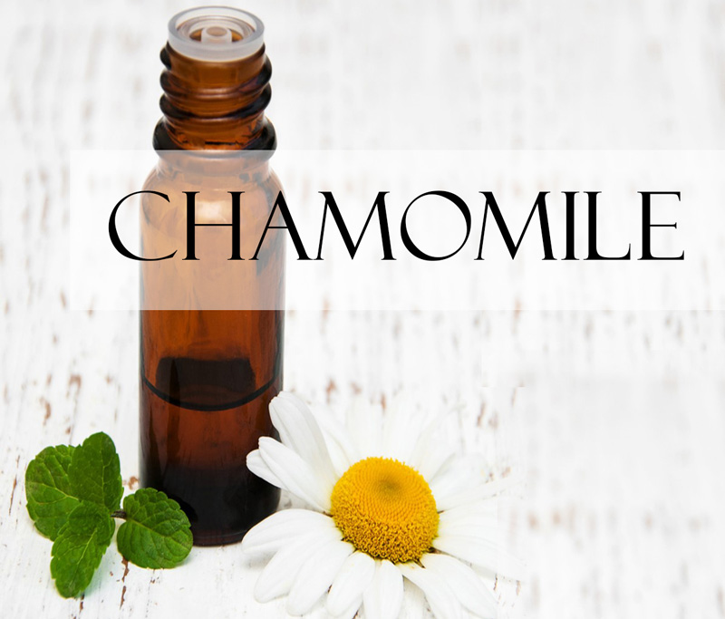 a chamomile flower with a chamomile essential oil vial