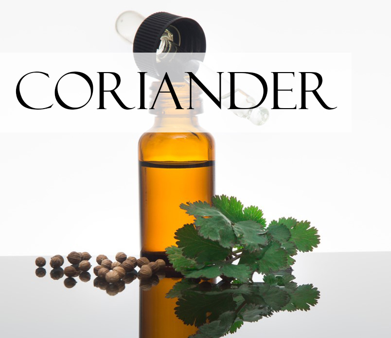 a vial of coriander essential oil with a sprig of coriander leaf and some coriander seeds