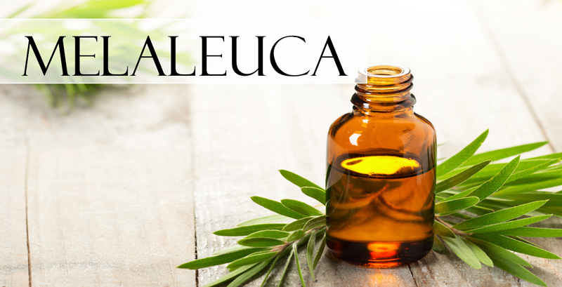 a vial of melaleuca essential oil